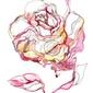 Naklejka róża
