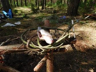 Bezkrwawe łowy - polowanie aparatem - mazury - 14h