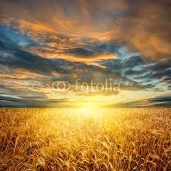 Naklejka samoprzylepna pole pszenicy poziomej