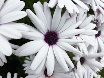 Fototapeta kwiat 292
