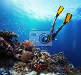 Plakat freediver
