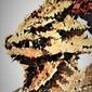 Polyamory - ornstein, dark souls - plakat wymiar do wyboru: 42x59,4 cm