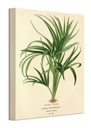 Curry palm - obraz na płótnie