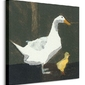 Kaczka i kaczątko - obraz na płótnie
