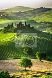 Fototapeta farm gajów oliwnych i winnic