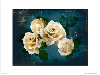 Róże Roses Midnight - plakat premium