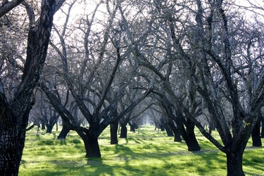 Fototapeta sad pełen drzew fp 1557