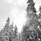 Fototapeta drzewa pokryte świeżym śniegiem fp 1799