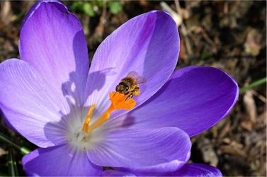 Fototapeta kwiat 96