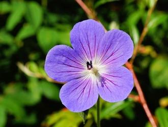 Fototapeta kwiat 174