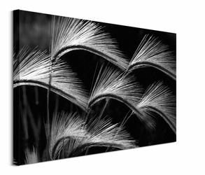 Grass Curls - obraz na płótnie