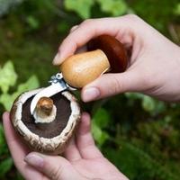 Zestaw do grzybów w breloczku