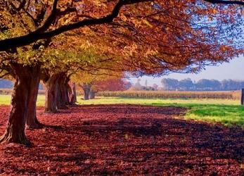 Kolorowy krajobraz - fototapeta
