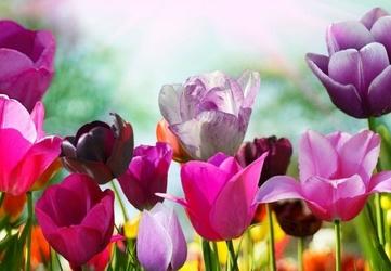 Piękne wiosenne kwiaty - fototapeta 366x254 cm