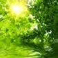 Naklejka samoprzylepna zielone liście odbijające się w wodzie