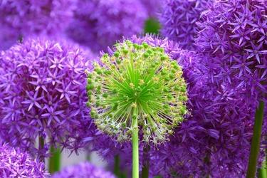 Fototapeta kwiat 303