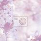 Fototapeta elegancki delikatny kwiat wiśni w tle