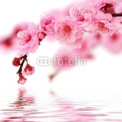 Obraz na płótnie canvas czteroczęściowy tetraptyk Wiosenne kwiaty wiśni odzwierciedlenie w świadczonych wody