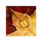 Jesiennie - kropla na liściu - reprodukcja