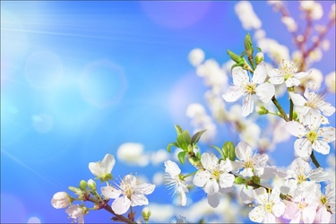 Fototapeta kwiatki 2218