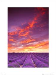 Tom Mackie Purple Field And Sky - plakat premium
