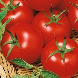 Pomidor harzfeuer f1 – wczesny – kiepenkerl