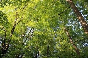 Fototapeta na ścianę malowniczy zielony las fp 1413