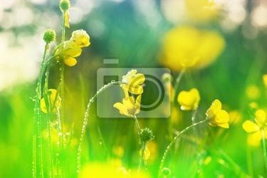 Fototapeta letnia łąka