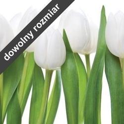 Fototapeta do kuchni białe tulipany 04