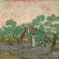 Women picking olives, vincent van gogh - plakat wymiar do wyboru: 100x70 cm