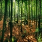 Złoty potok - plakat premium wymiar do wyboru: 40x30 cm