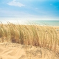 Słoneczne wybrzeże - plakat wymiar do wyboru: 40x30 cm