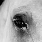 Oko Białego Konia - duży plakat