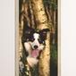 Fototapeta na drzwi pies w lesie p6
