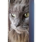 Foto naklejka na lodówkę kot p17