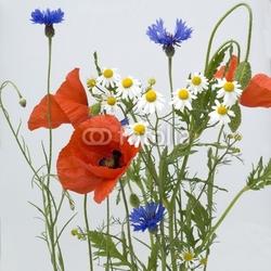 Obraz na płótnie canvas dwuczęściowy dyptyk dzikie rośliny, maki, chabry, rumianek