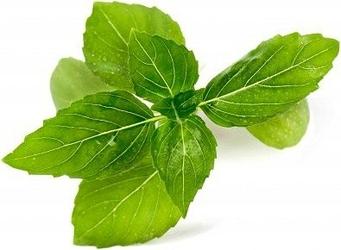 Wkład nasienny Lingot zioła nietypowe bazylia cynamonowa