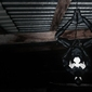 Black spider-man - plakat wymiar do wyboru: 80x60 cm