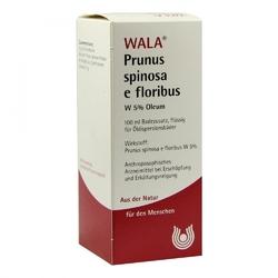 Prunus spinosa e flor. w 5 oleum