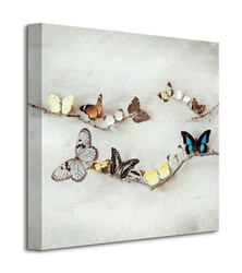 Array of butterflies - obraz na płótnie
