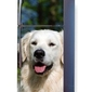 Fototapeta na lodówkę golden retriever pies p27