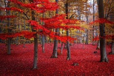 Fototapeta las jesienią 774a