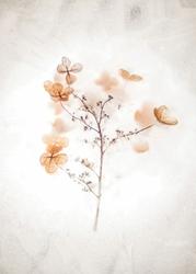 Suszone kwiaty - plakat