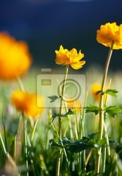 Fototapeta kwiat