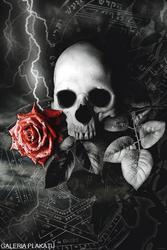 Czaszka i Czerwona Róża - plakat