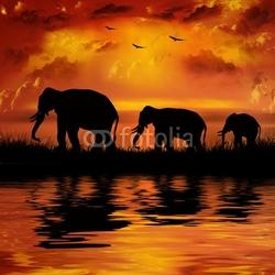 Plakat na papierze fotorealistycznym słonie na pięknym tle zachodu słońca