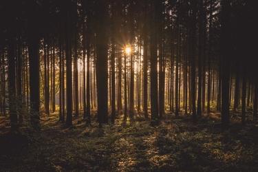 Fototapeta na ścianę słońce przedzierające się przez drzewa fp 3862