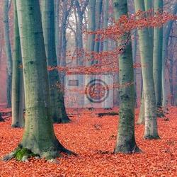 Fototapeta mglisty las jesień