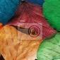Fototapeta kolor liści