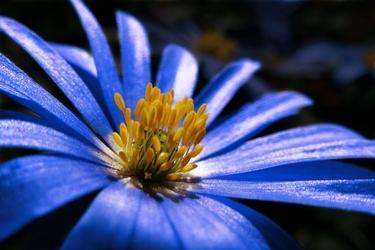 Fototapeta kwiat 335